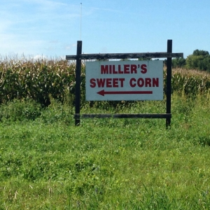 Where the counties of Johnson meet, past the concrete bridge, left on the second dirt road and 2 miles, as a crow fly's, is the near autumn sweet corn provider of Miller's farm.  2864 YY Ave. Parnell, IA